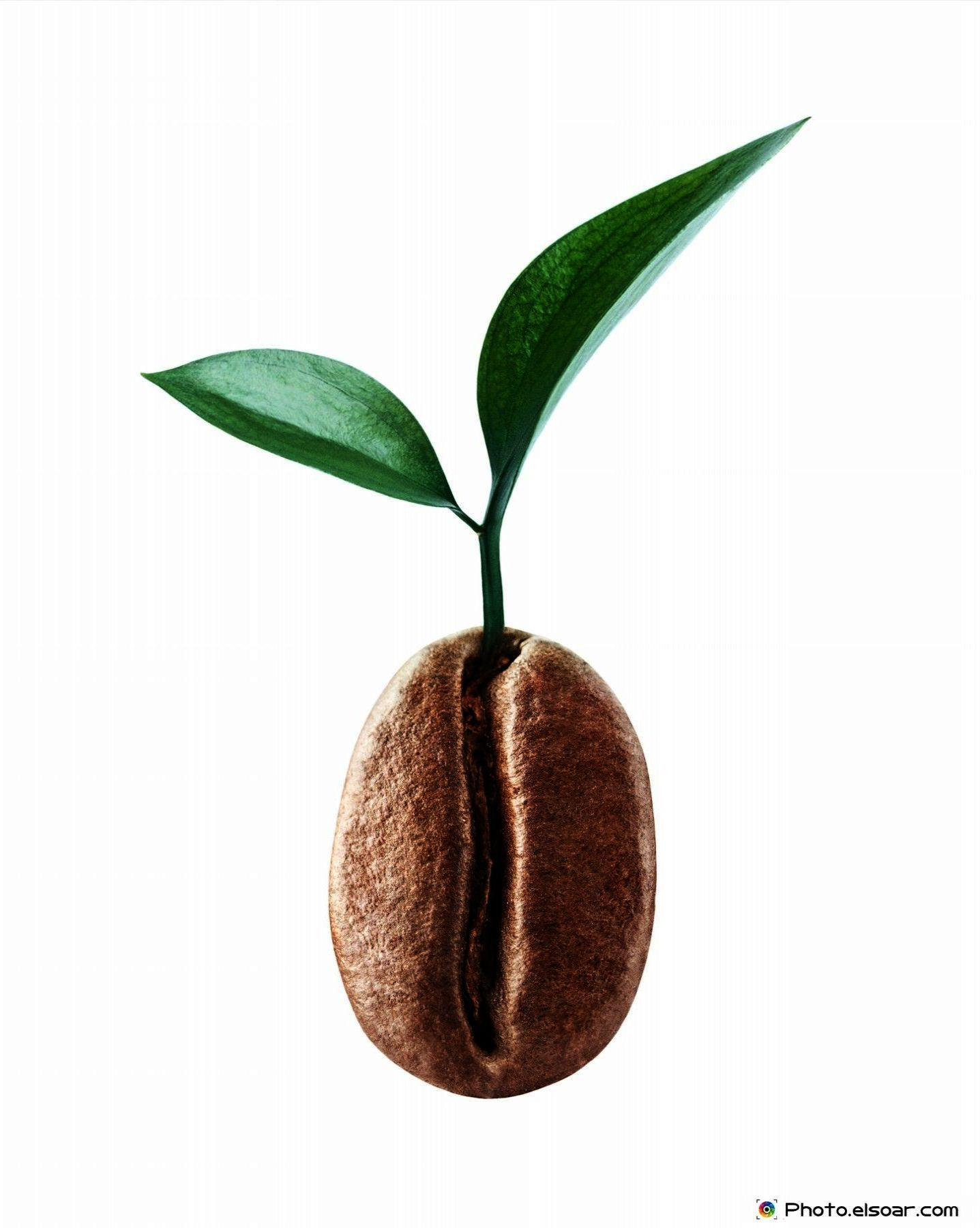 Ground coffee pouches coffee beans buy organic coffee