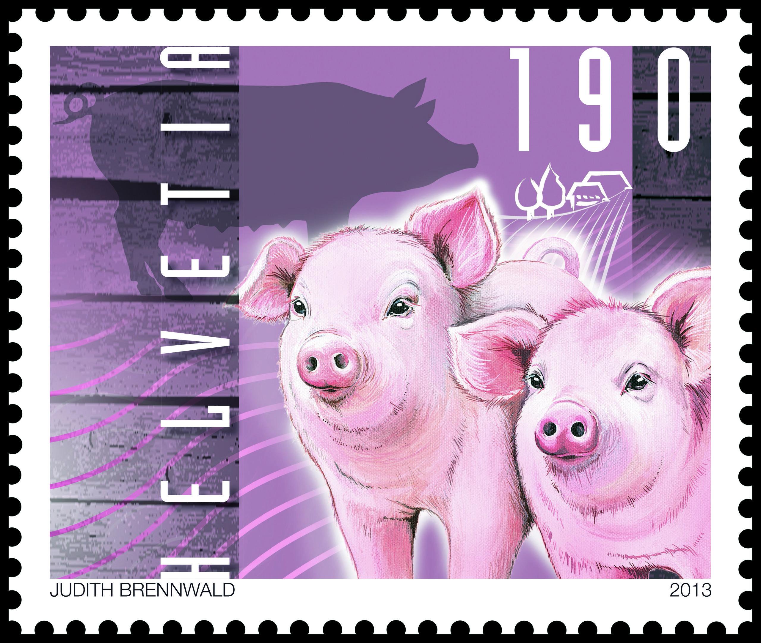 Schweiz 2013 Jungtiere auf dem Bauernhof Schweine