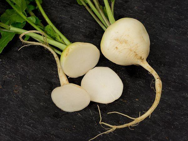 Philadelphia White Box Radish Heirloom Garden Seeds | Heirloom ...