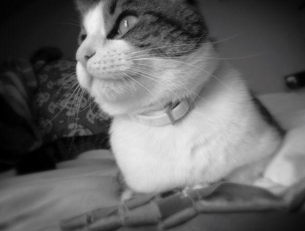 Emily your cat is very photogenic @EmilyBracey