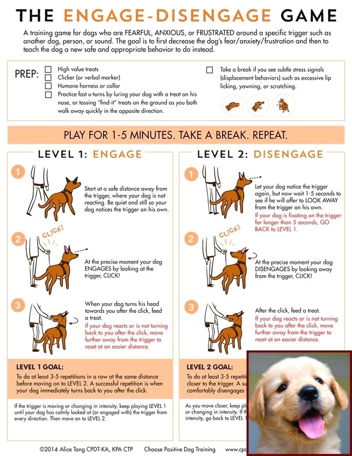 1 Have Dog Behavior Problems? Learn about Potty Training