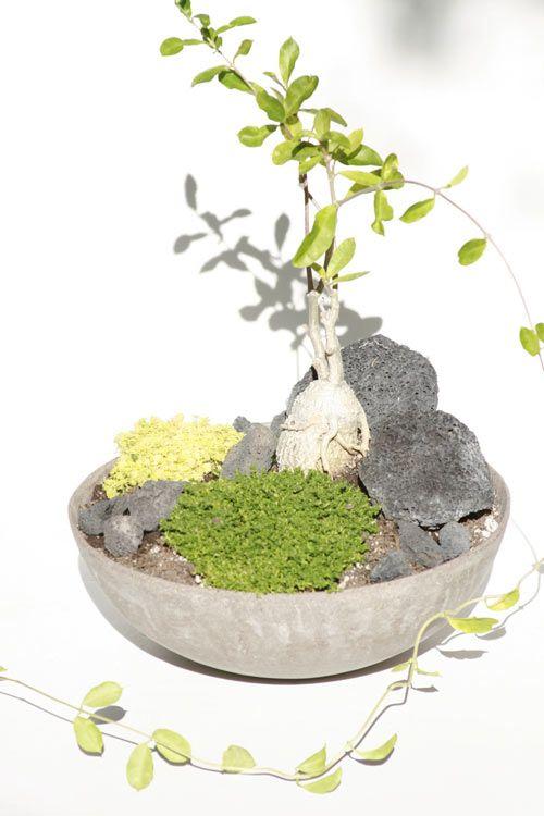 MilkWeed: Plant Porn Photo