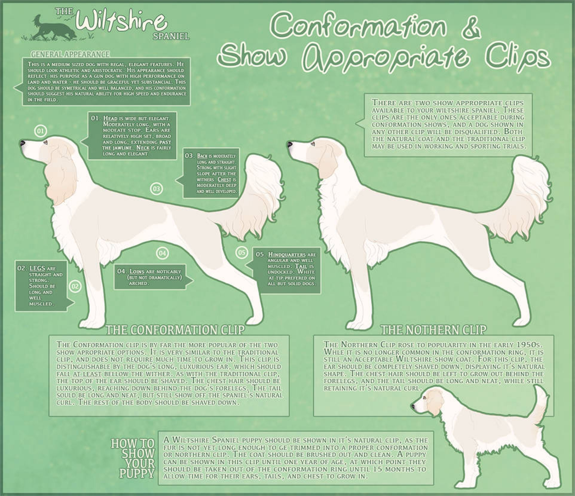 Wiltshire Spaniel Conformation And Show Clips By Leavingneverland