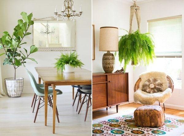 Las mejores plantas para decorar interiores  Decoracion