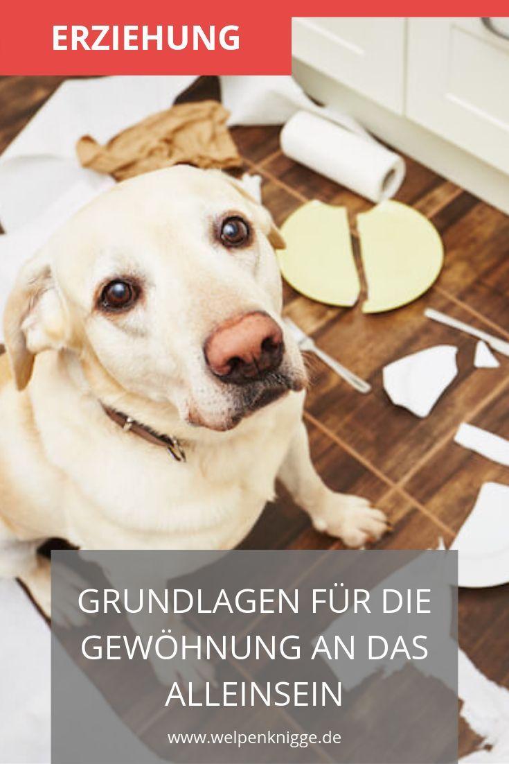 Welpen Alleine Lassen Welpen Hundeerziehung Hundehaltung