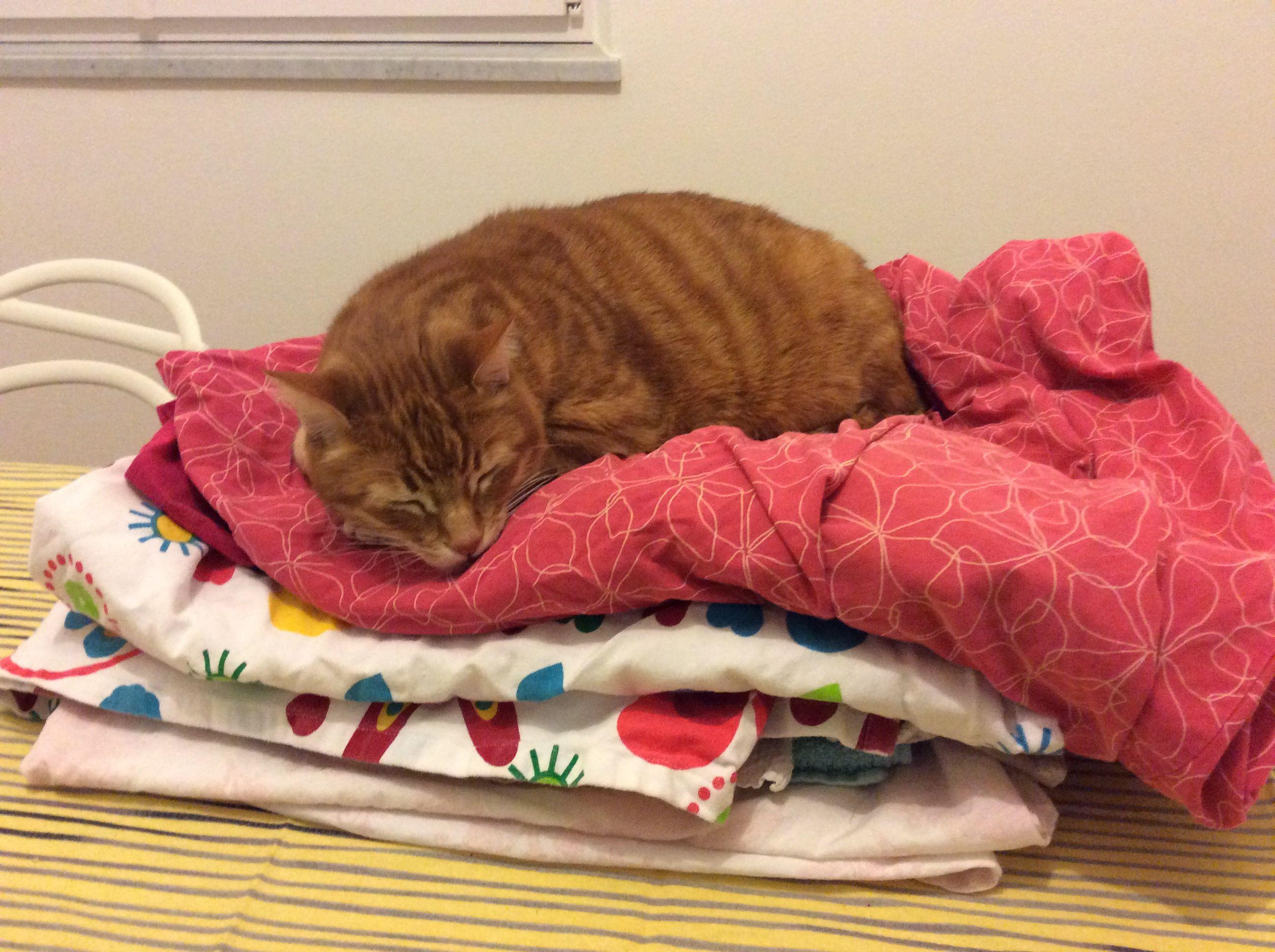 Orazio, sui panni lavati si dorme meglio!!