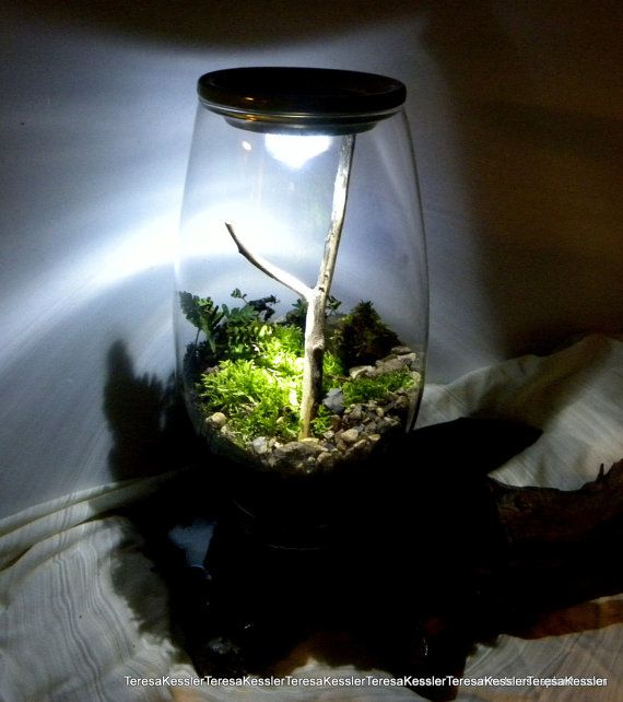 Light Up Your Terrarium Or Fairy Garden Waterproof Led Light For