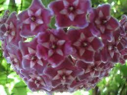 flor de cera - Pesquisa Google