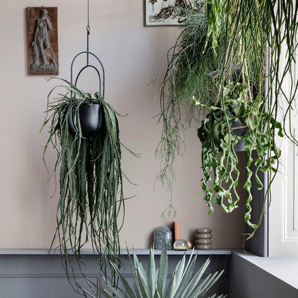 Hanging Deco Pot Hanging Plants Hanging Plants Indoor Hanging