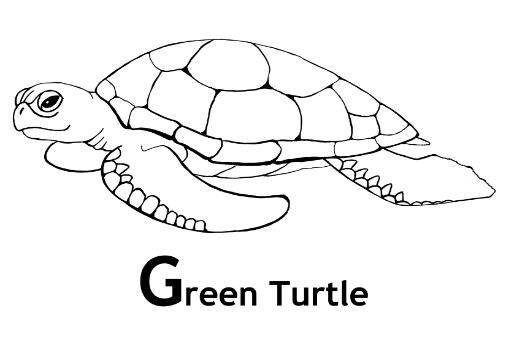 Green Sea Turtle Coloring Page Turtle Drawing Turtle Coloring