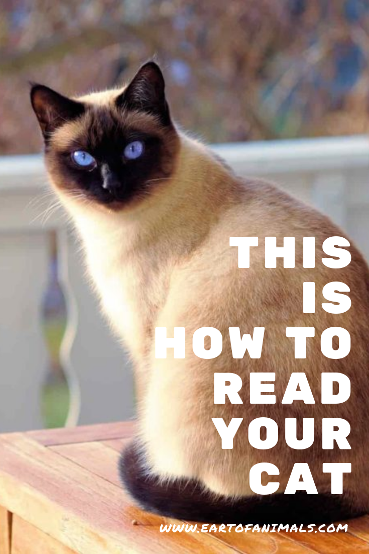 This Is How To Read Your Cat Buy A Cat Owning A Cat Cat Online