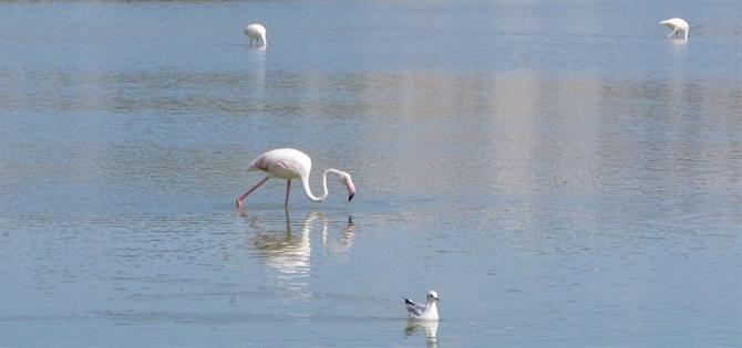 Flamingos flock to the lakes