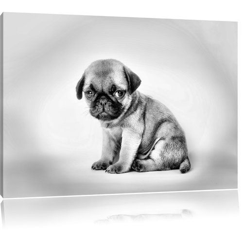 East Urban Home Small Pug Puppy Photographic Print On Canvas In