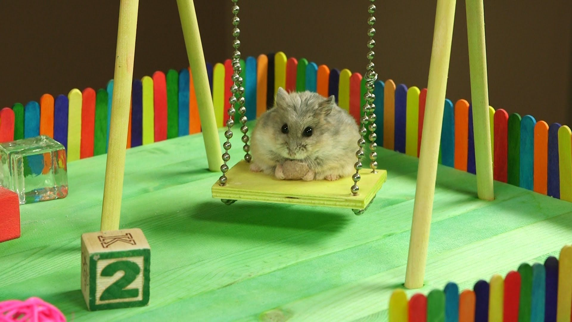 Tiny Hamster In A Tiny Playground This Is So Cute And At The End