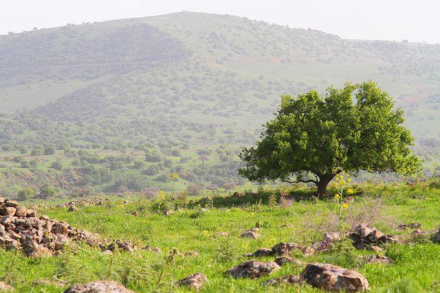 Yehudia Forest. Riserva naturale Foresta Yehudiya, Golan.