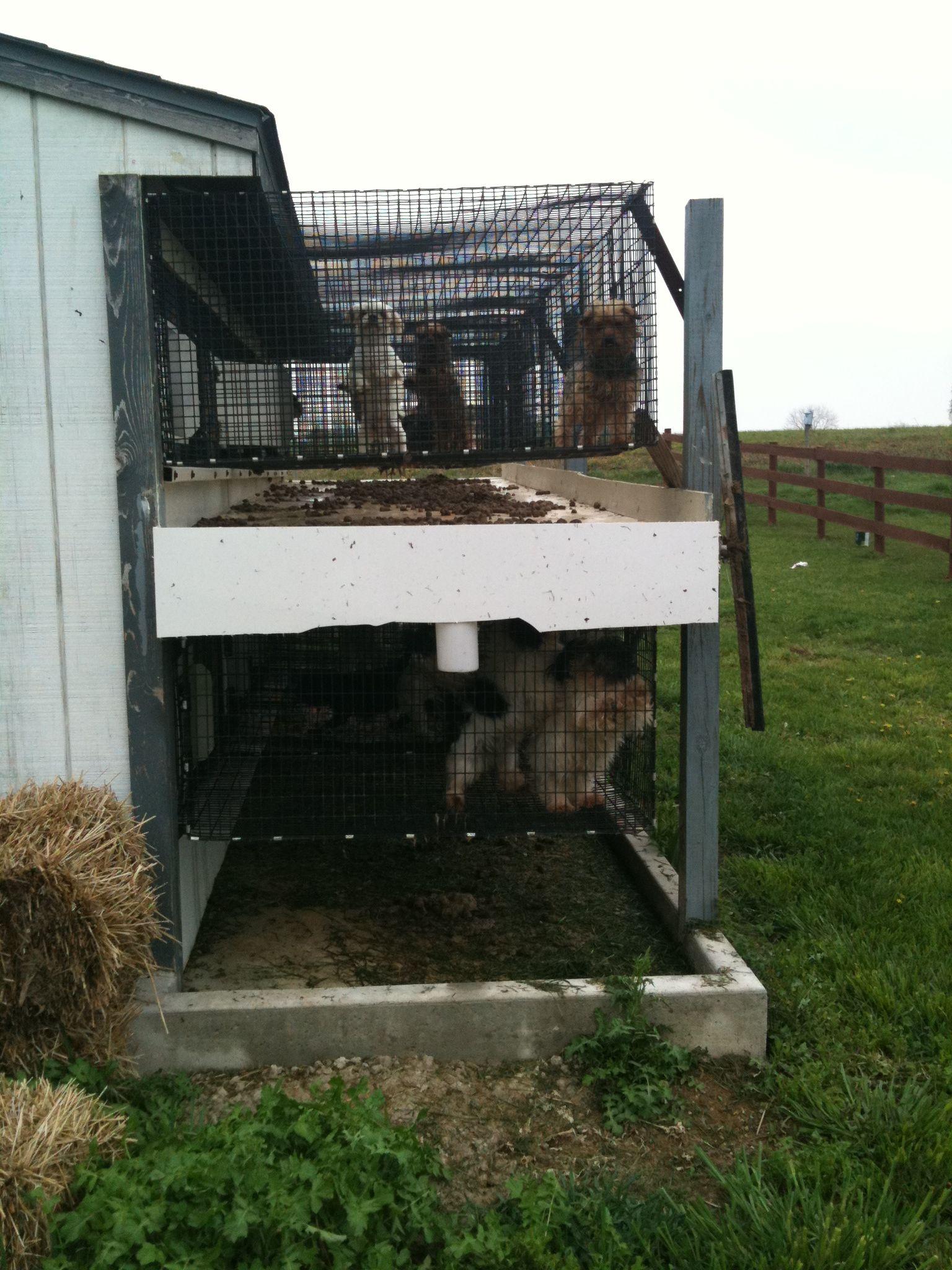 Indiana amish puppy mill. Puppy mills, Puppies, Dog breeder