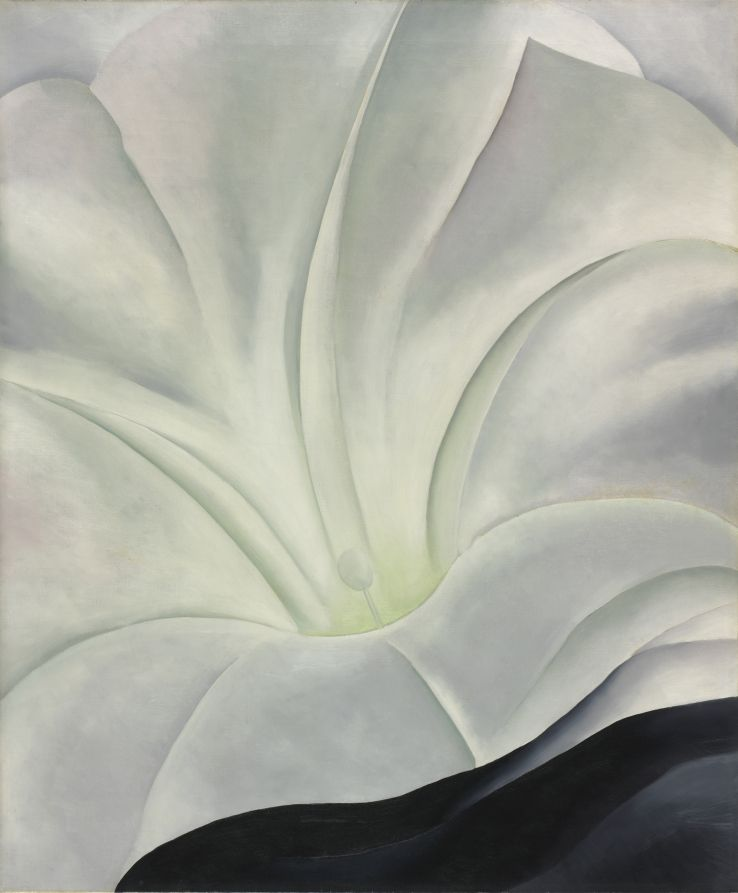 Morning Glory with Black / Georgia O'Keeffe / 1926.
