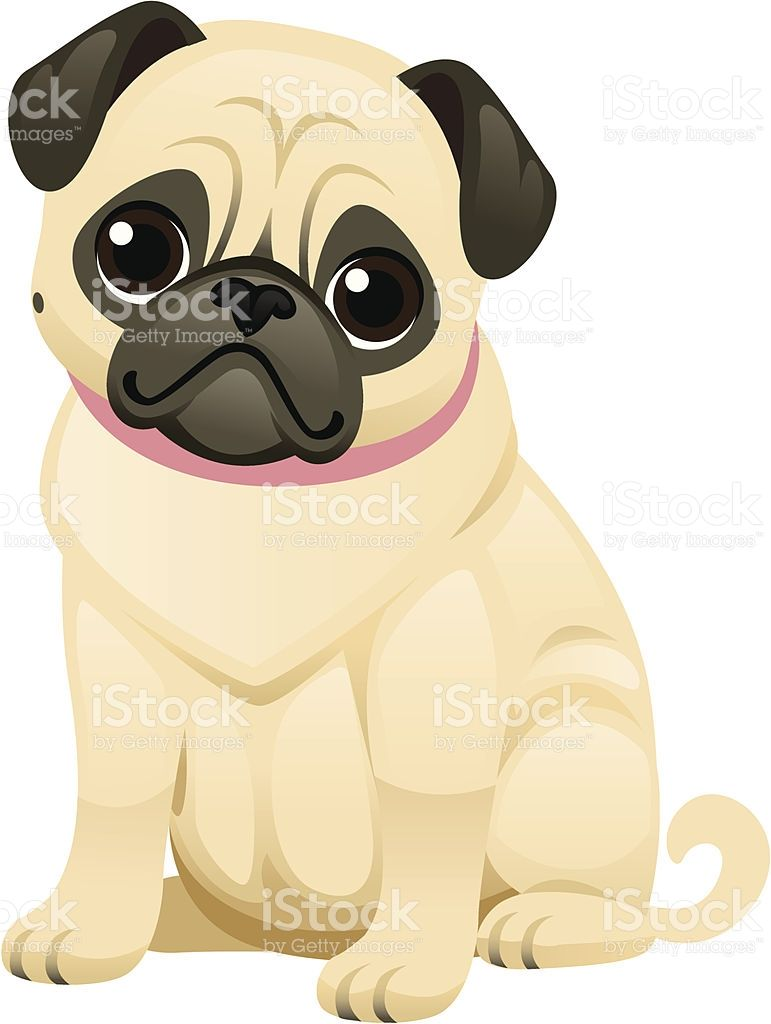 A Sweet Little Pug Wearing A Collar The Face Body And Collar