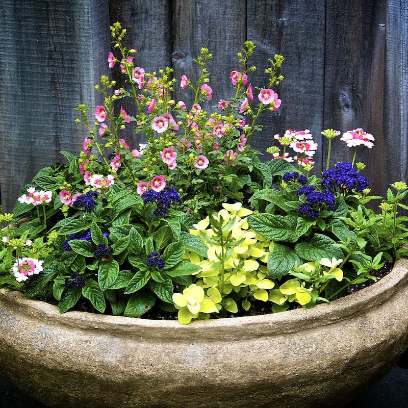 Love Potted Plants? Here Are 5 Tips for Gorgeous Container Gardens ...