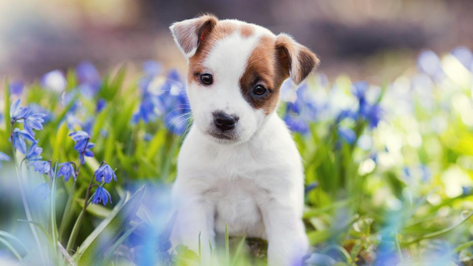 Here S Why Your Dog Is Cute Cute Dogs Pet Puppy Cute Puppies