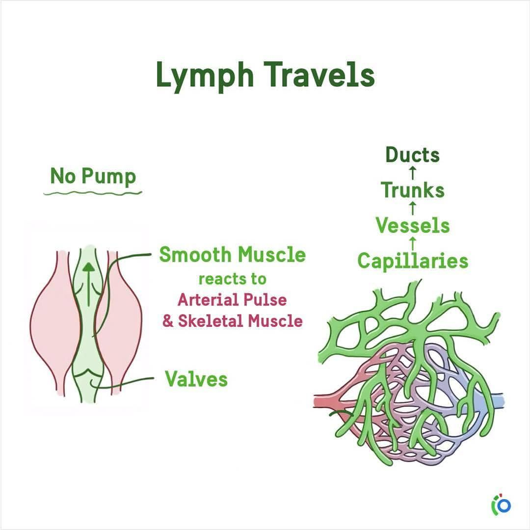 Meducalmed I I Once The Lymph Is Inside The Lymphatic
