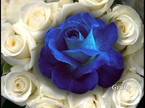 Una Rosa Blu Per Te Che Sei Speciale Youtube Tani1