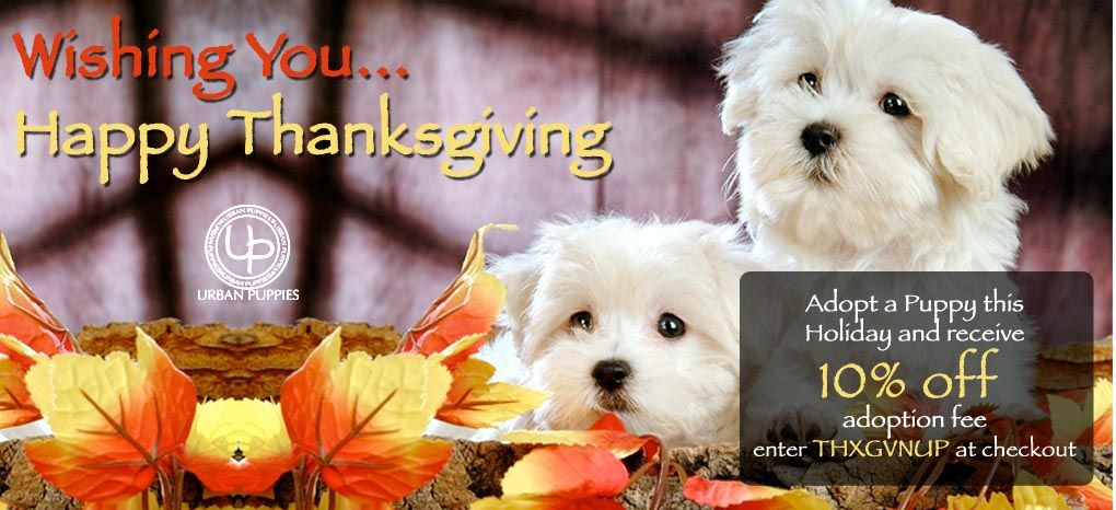Take advantage of our special 10 off thanksgiving day