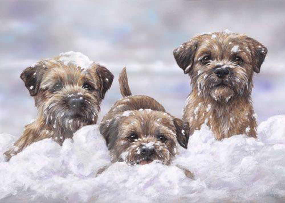 Border Terrier Head Limited Edition Print By Mick Cawston Border