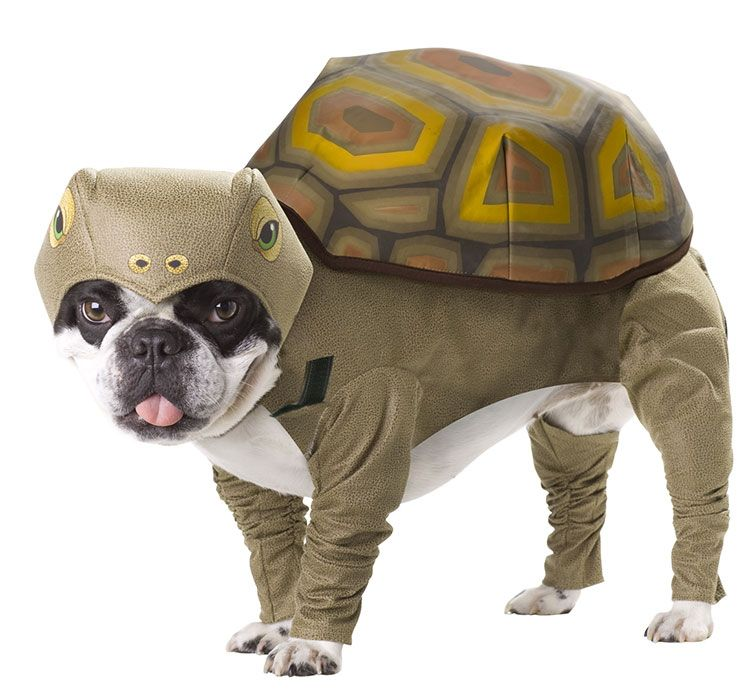 hahahaha!  This one is almost as good as the triceratops!  #bostonterrier medium dog halloween costume
