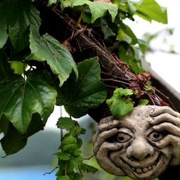 さとおっちゃん的 男の庭つくりの画像 夏 と 庭