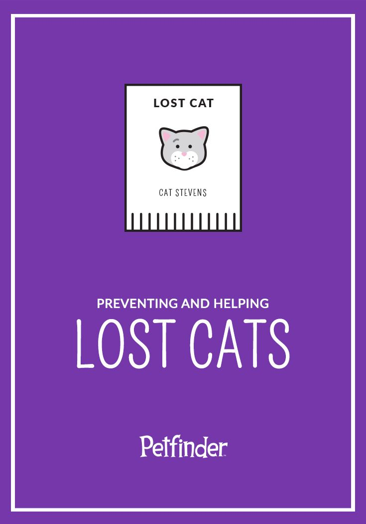 Infographic Gallery Preventing And Helping Lost Cats Petfinder Lost Cat Cat Medicine Cat Behavior