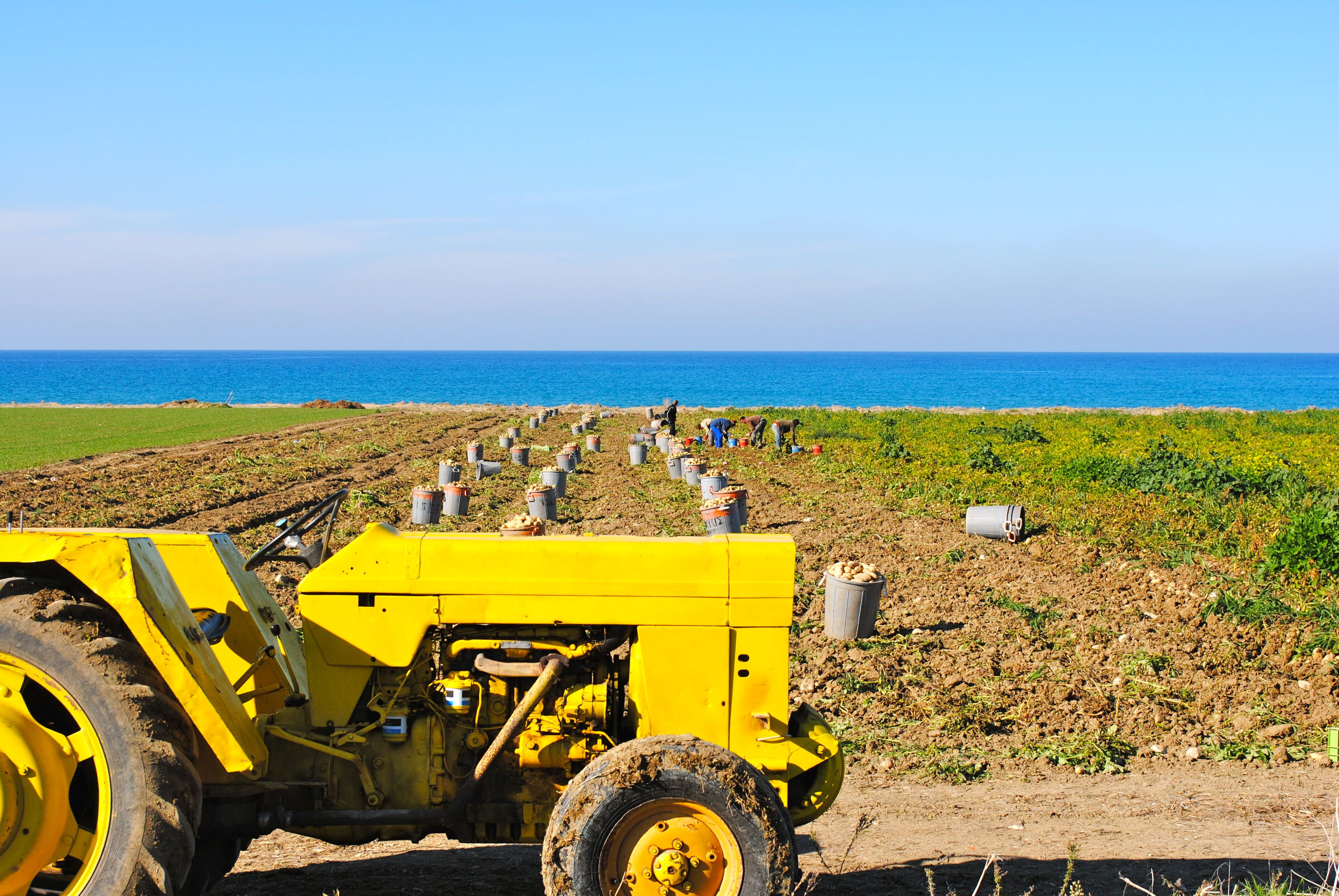 potato pickers Christmas Eve on Cyprus