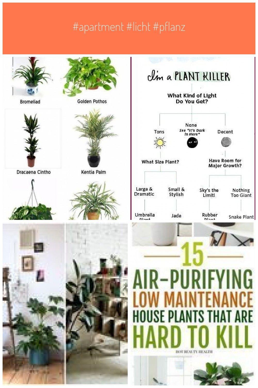 Apartment #Licht #Pflanzen #Trendy #wenig #Apartment #Licht