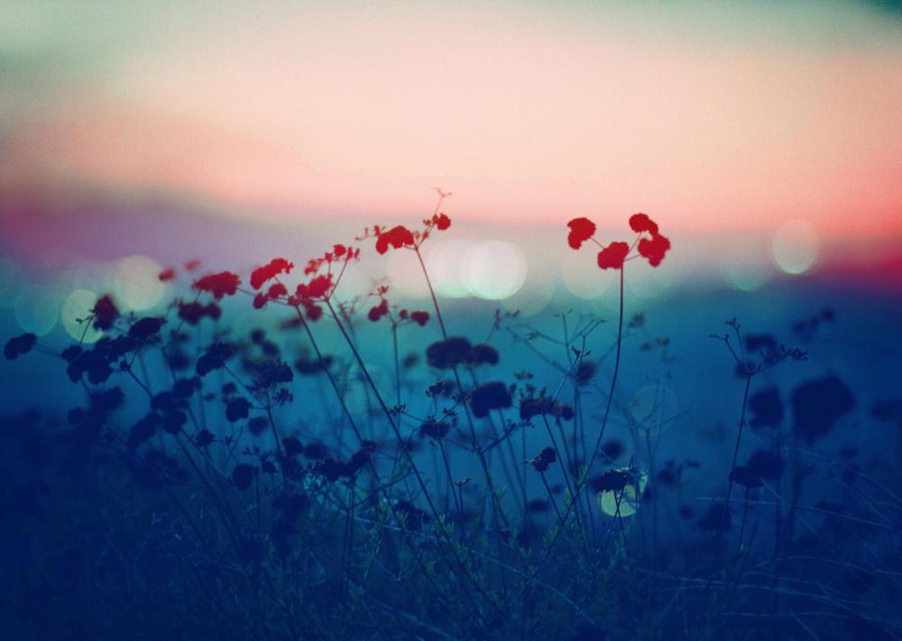 foxmouth: Landscapes, 2014  byAnthony Samaniego - ε≡ε≡ε≡(ノ´_ゝ`)ノ