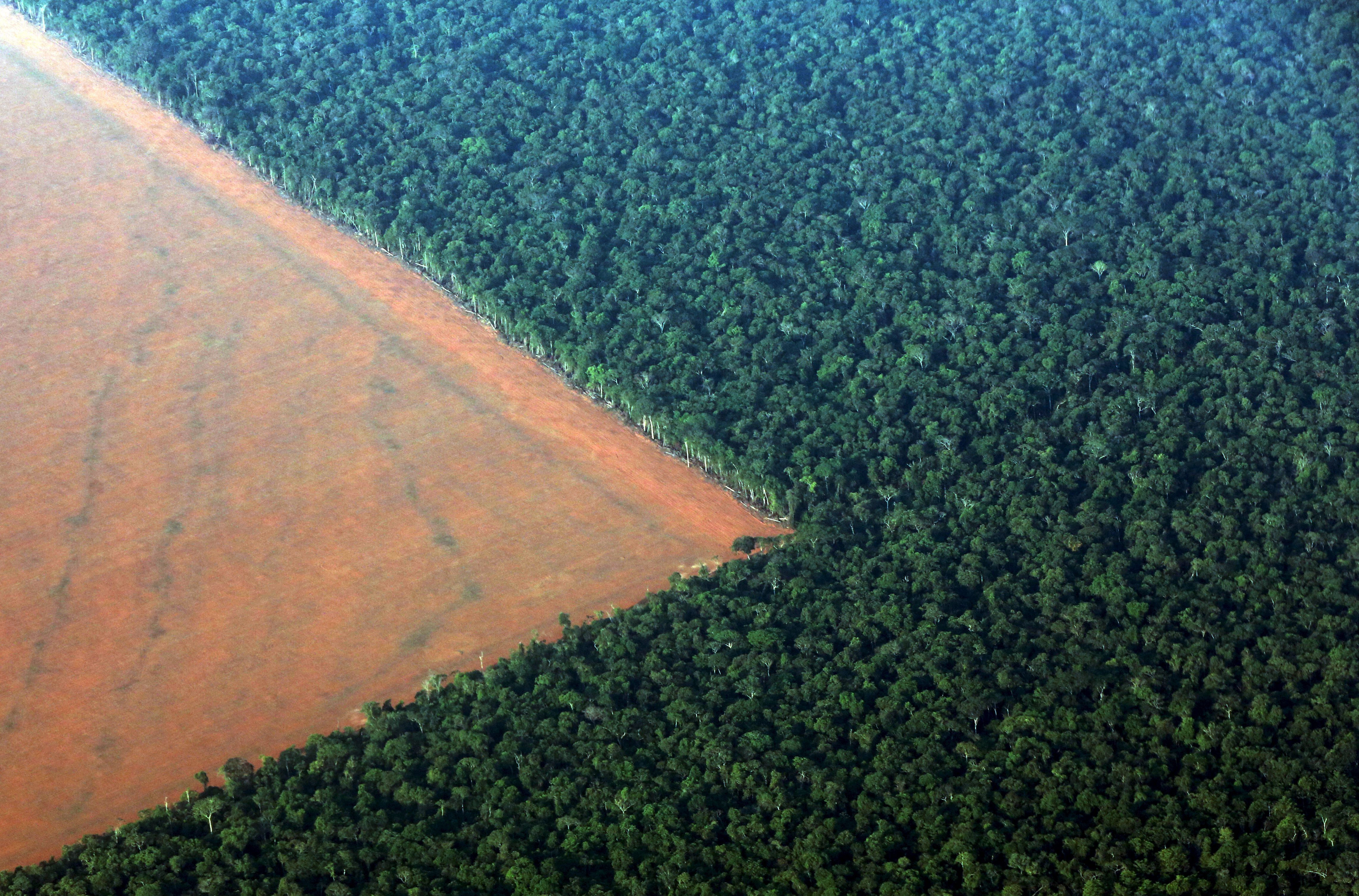 The Amazon rain forest (R), bordered by deforested land prepared for the planting of soybeans in  Mato Grosso state in western Brazil
