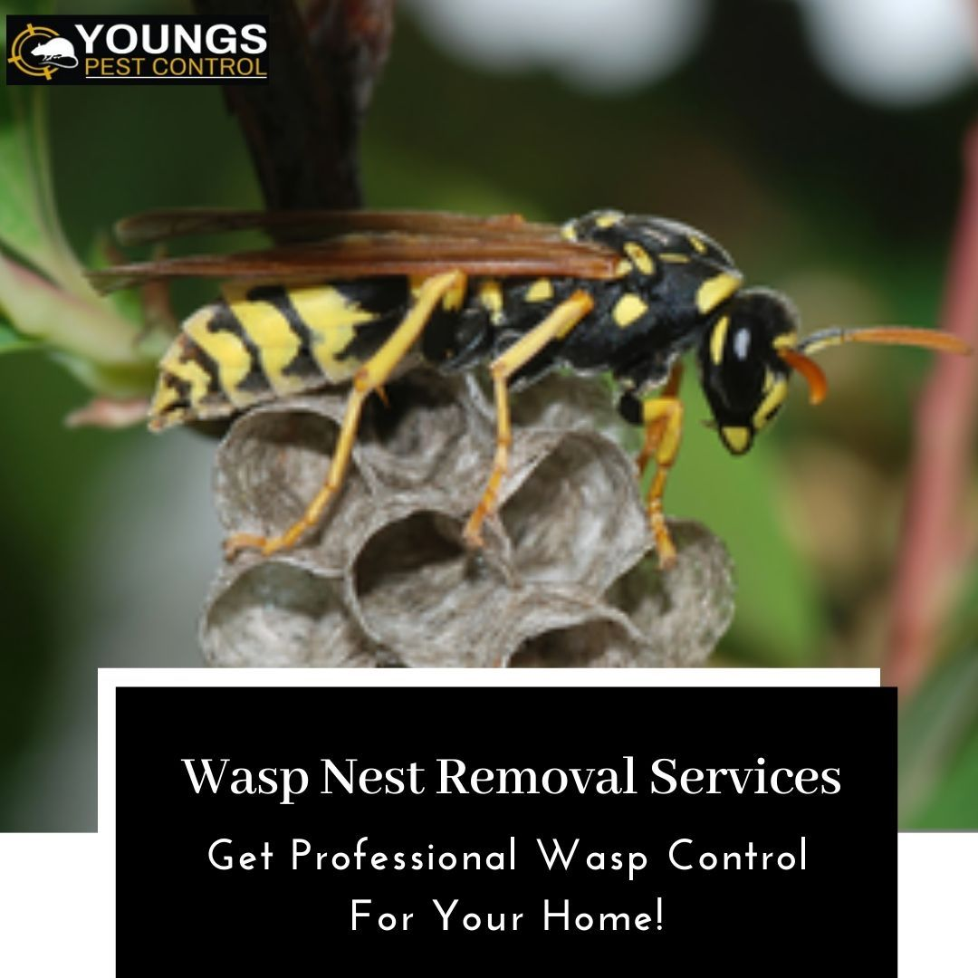 dba67d3aa224ed0373559effa38c142c - How To Get Rid Of Small Paper Wasp Nest