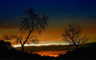 Beautiful Sunset near two trees - Wallblast - Wallpapers, Photos, funny pictures
