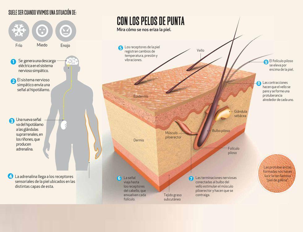 Infografia Piel De Gallina Jpg 980 750 Infographic