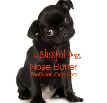 Pug Nose Butter 2 Ounce For Dry Crusty Pug Dog By Theblissfuldog