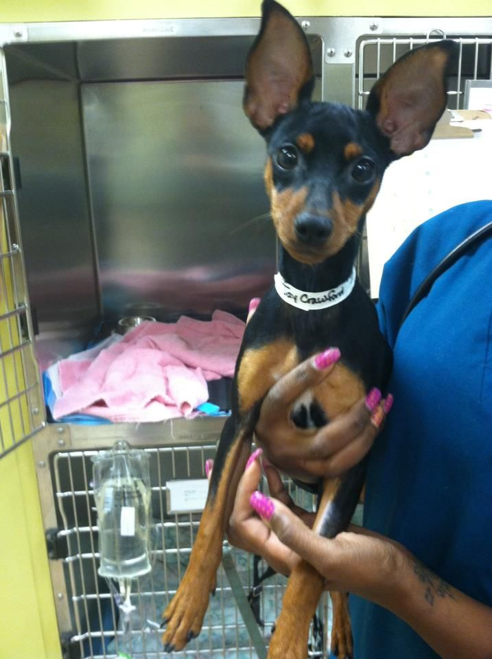 This Dog Is Currently At Veterinary Emergency And Referral Group