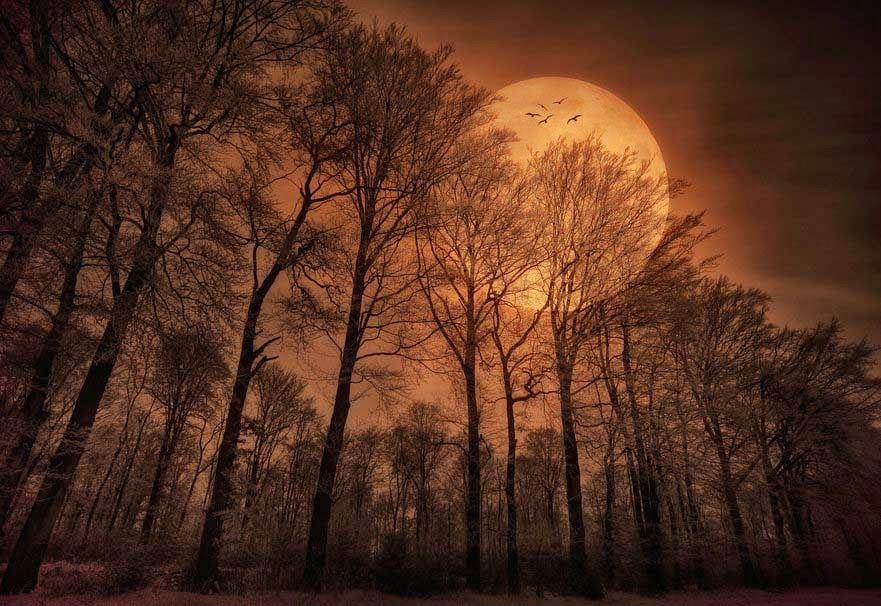 Nature Night Moon Birds Moonlight Pinterest Moon Autumn And