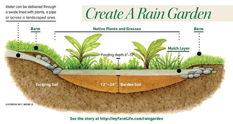 Create A Rain Garden Utilize Rain Run Off From Roofs Driveways Rain Garden Design Rain Garden Rain Garden Diy