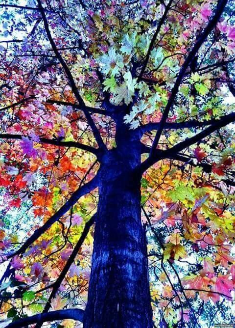 Pin By Lenny Tjahjadi On Artistic Trees Colorful Trees Beautiful Tree Rainbow Tree