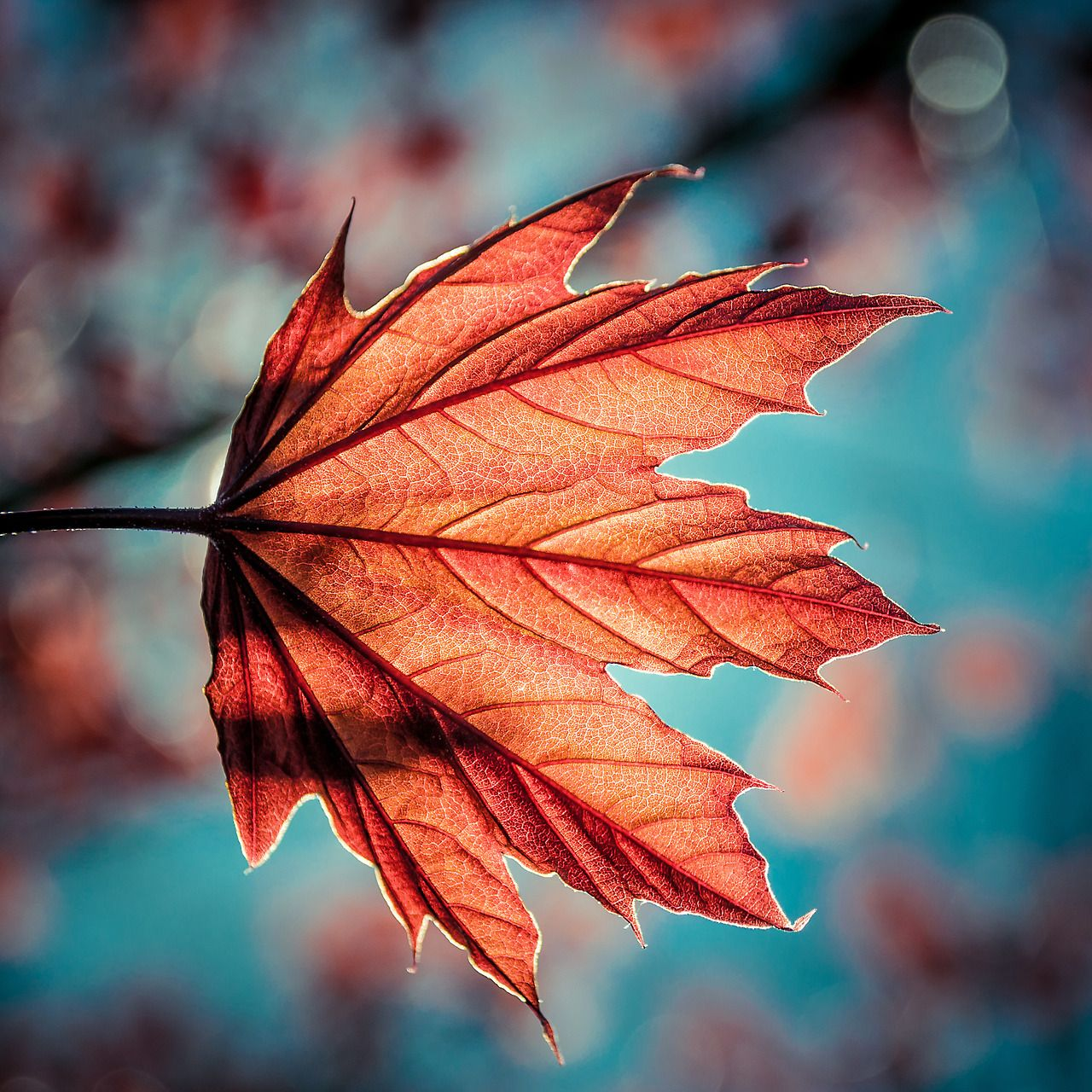 "davidmccandlessphotography:  ""Leaf of Light""  I like it"