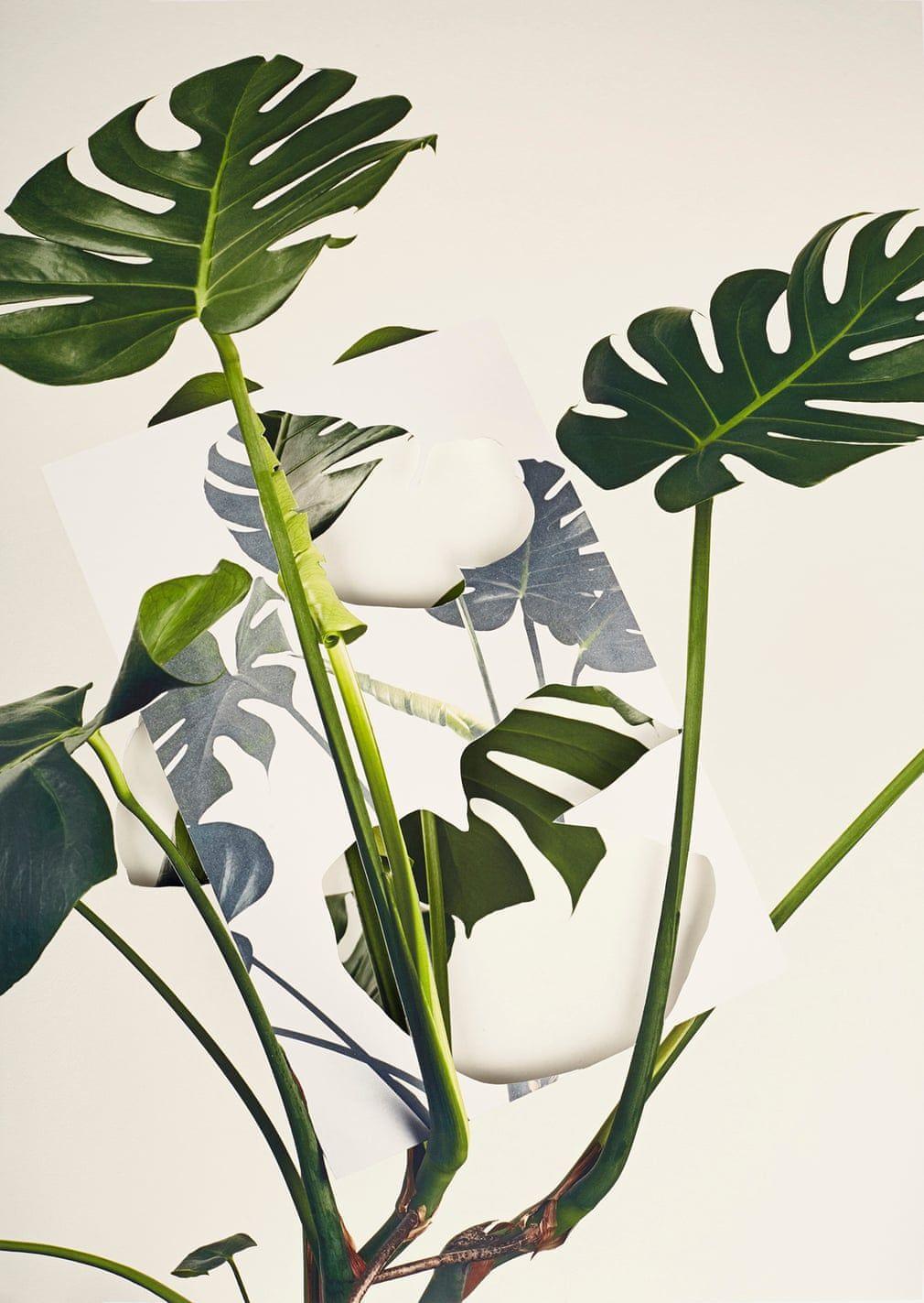 Fake leaves Alma Haser's fantasy plants in pictures