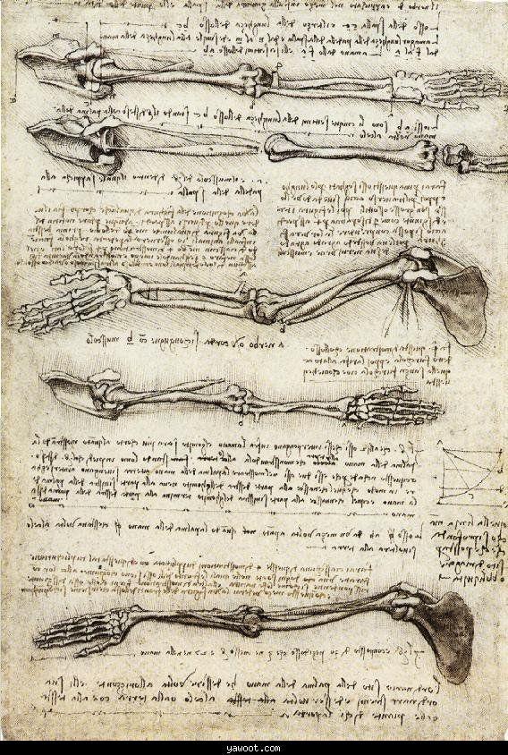 Da Vinci Sketches Renaissance Art Pinterest Sketches Anatomy