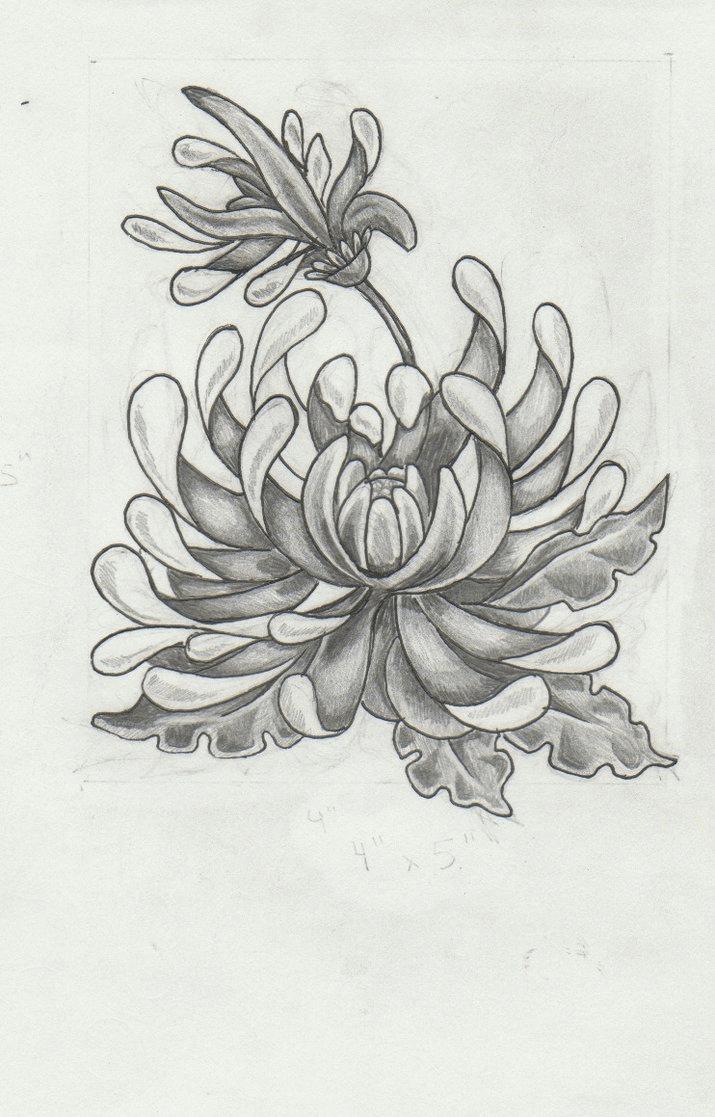 Chrysanthemum Flower Drawing Chrysanthemum Tattoo Chrysanthemum Drawing Flower Tattoos