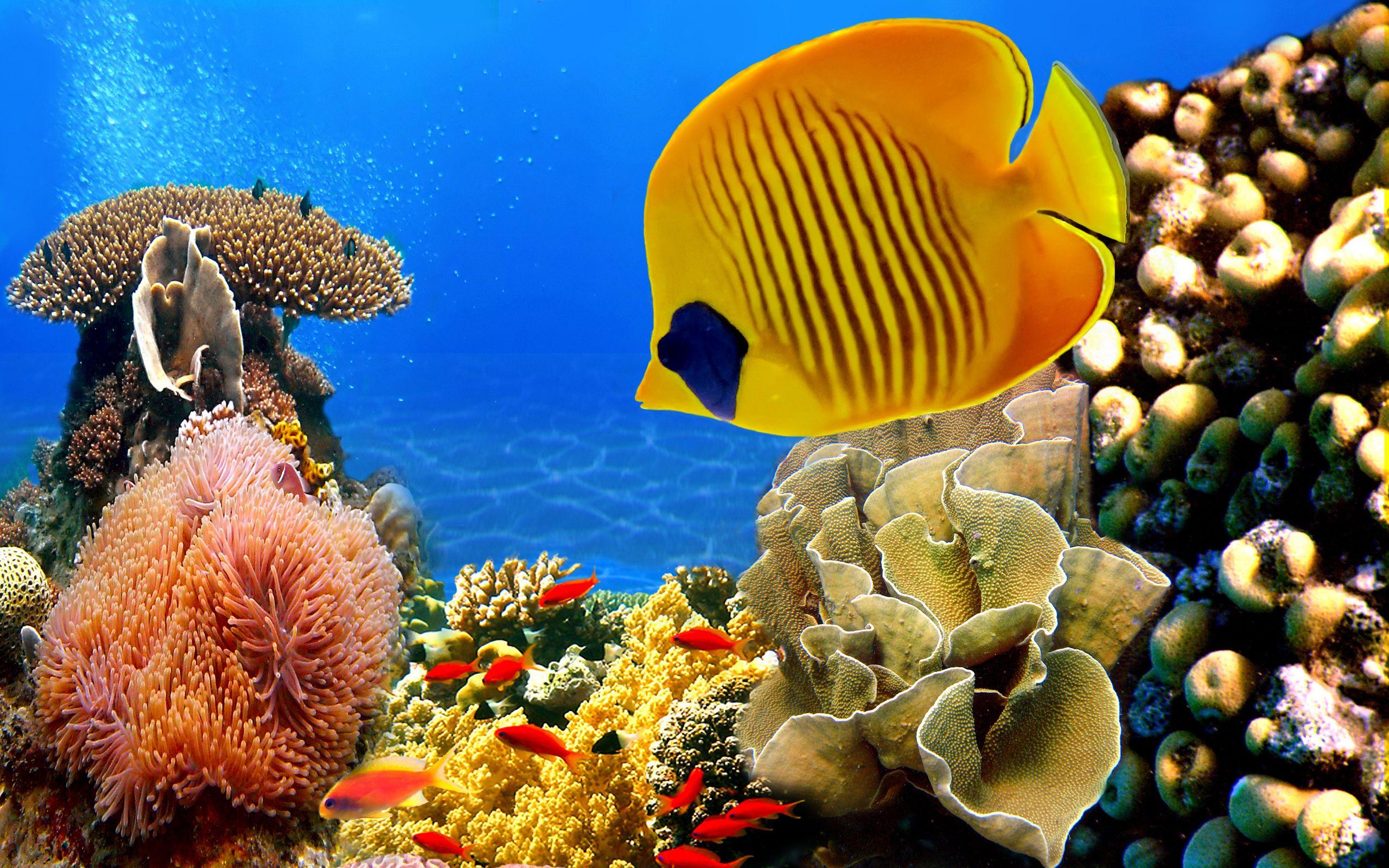 Fonds D Ecran Monde Sous Marin Poisson Animaux Image 359484 Telecharger Poisson Tropical Fond D Ecran Corail Sous Marin