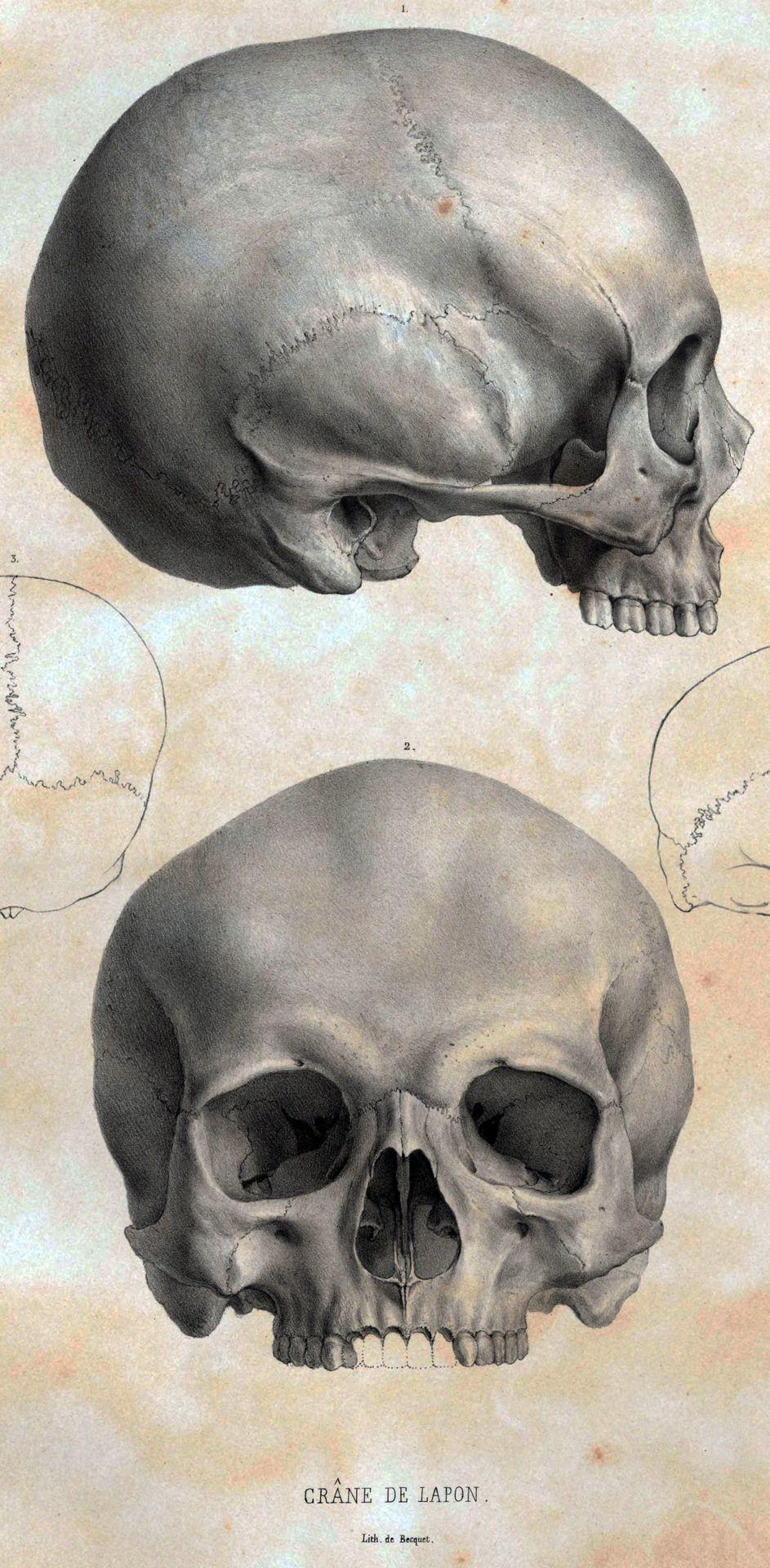 #skull #calavera #craneo