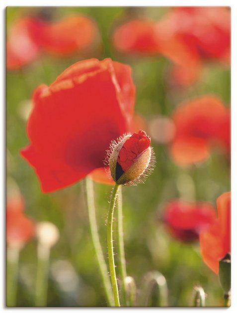 Photo of Artland Kunstdruck Poster »UtArt: Mohn im Feld« | OTTO